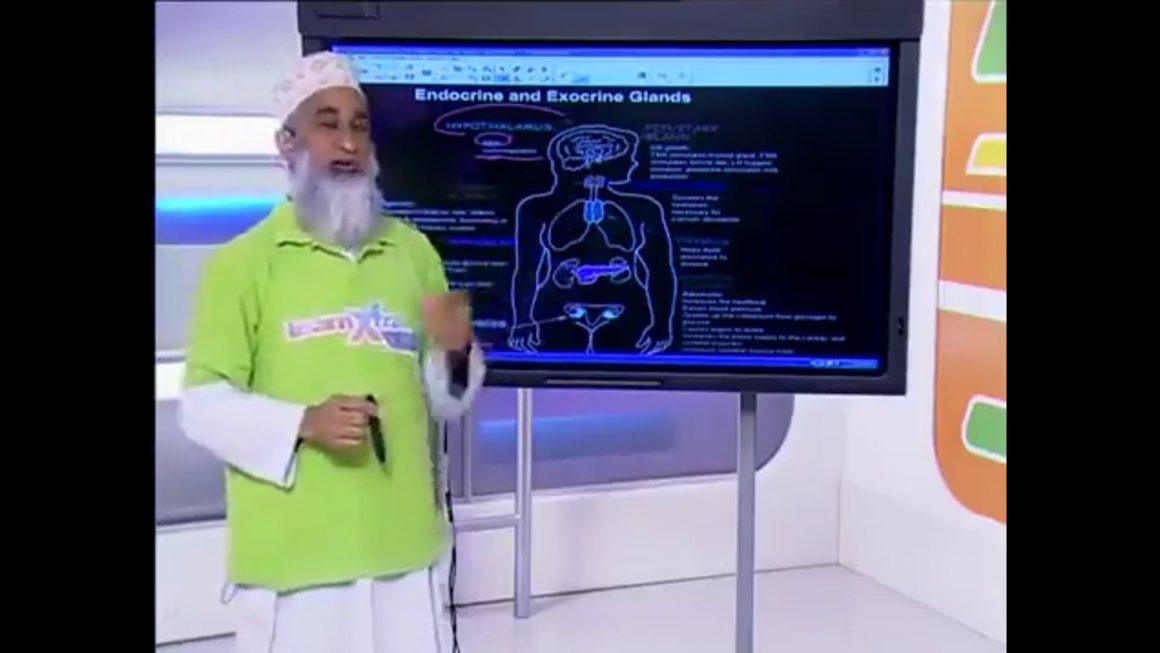 16 Human Endocrine System