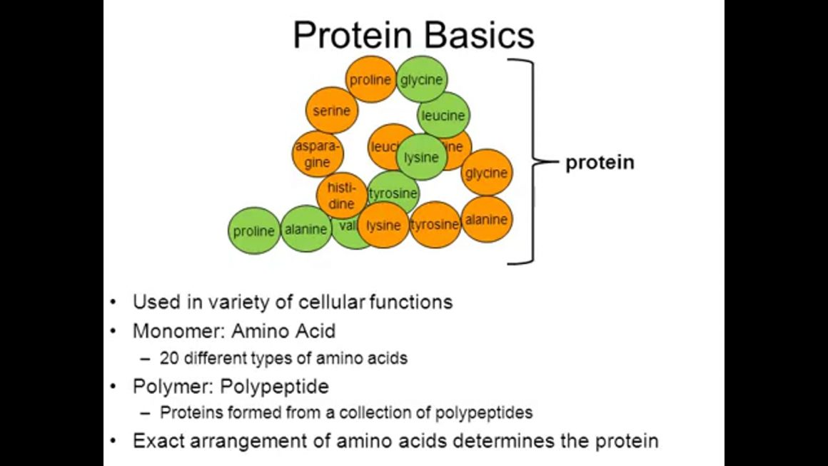 Proteins and Enzymes – regular – updated