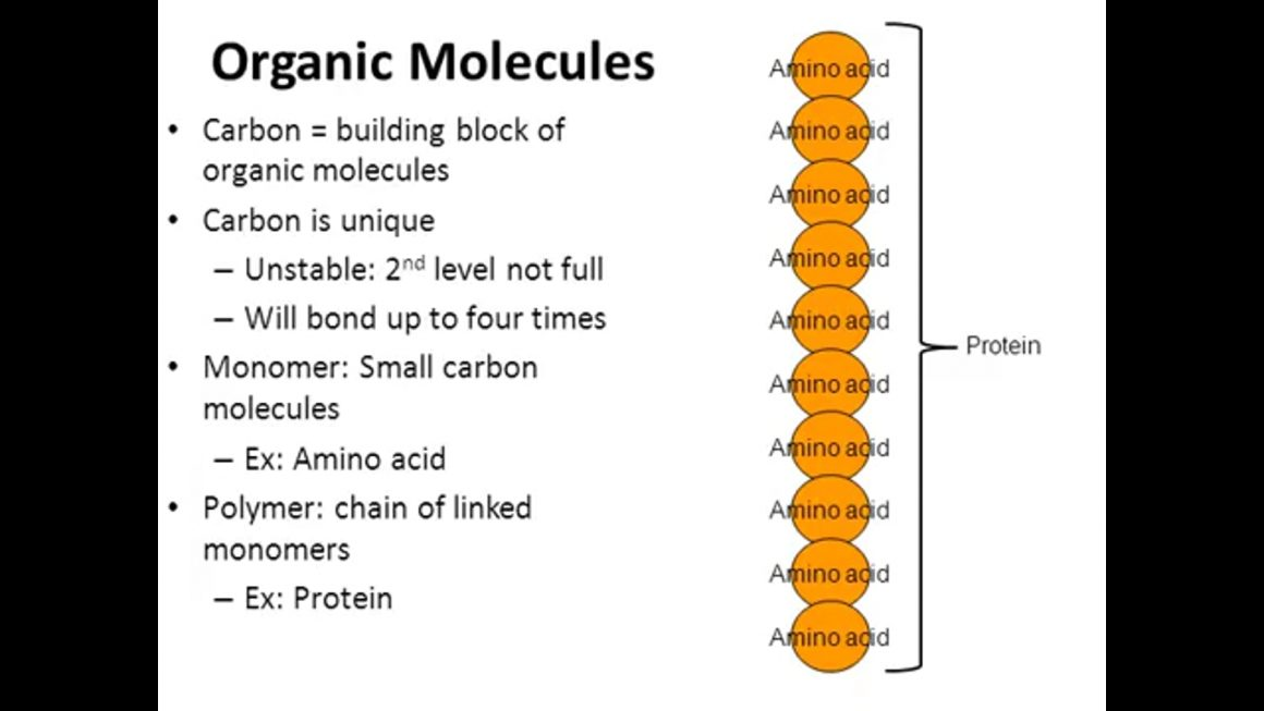Organic molecules and Carbohydrates – honours – updated