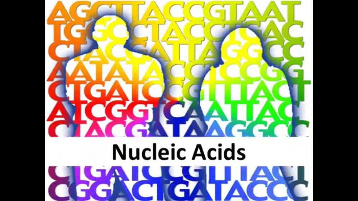 Nucleic acids – honours – updated