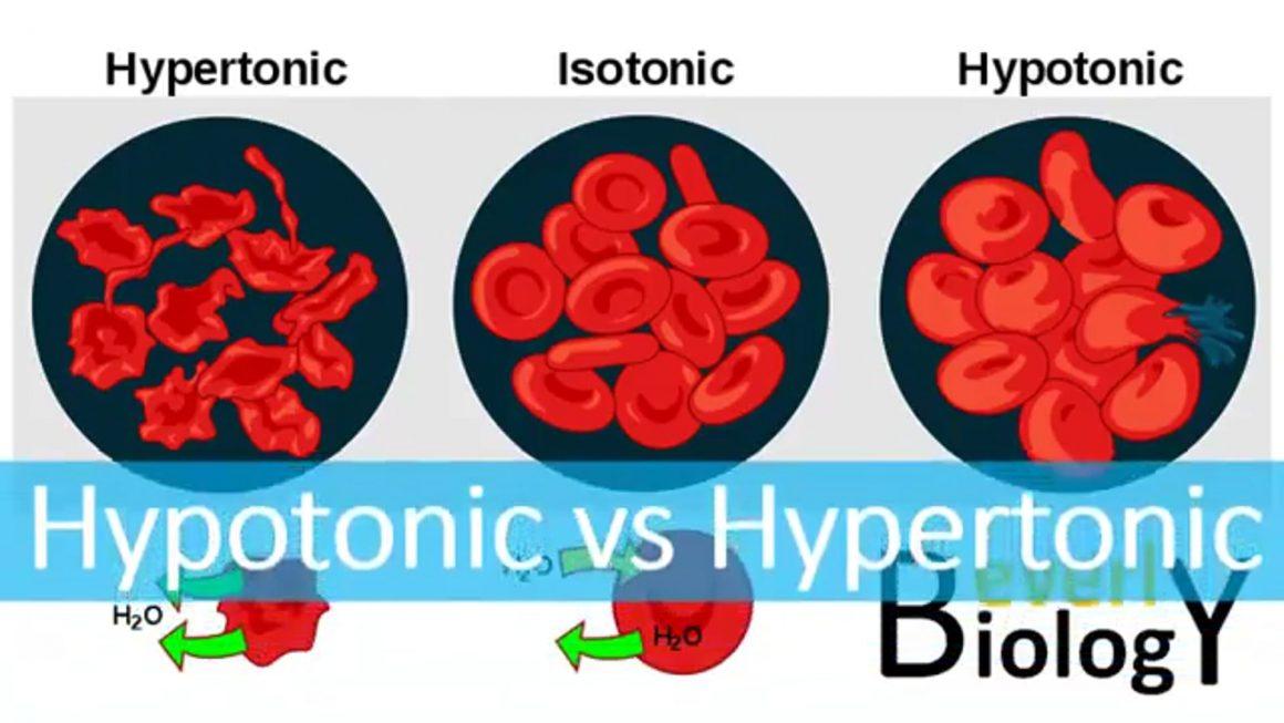 Hypotonic vs Hypertonic
