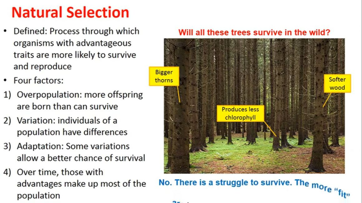 Evolution by Natural Selection – updated