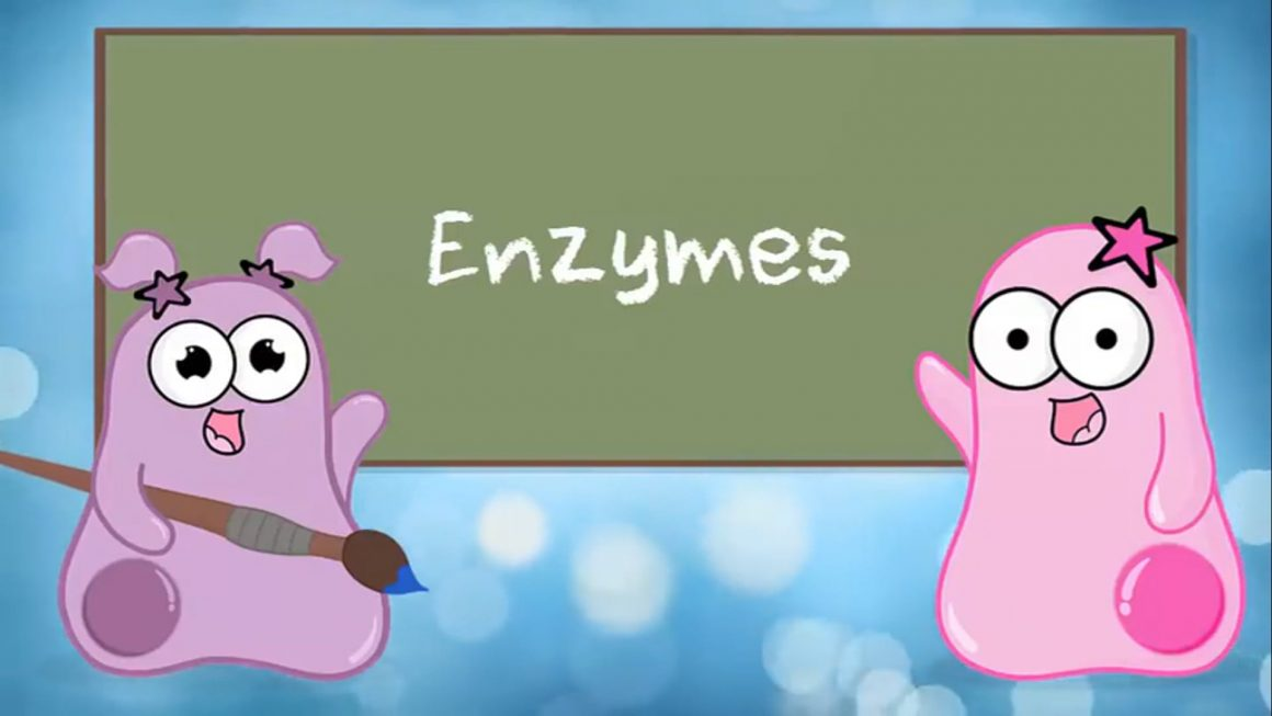 Enzymes – Updated