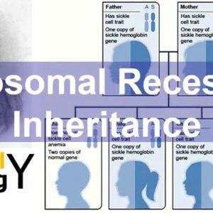 Autosomal recessive inheritance – story based