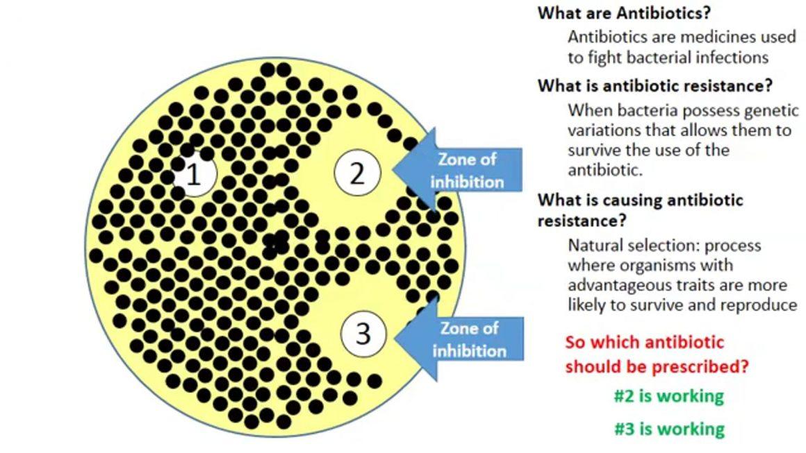 Anti-biotic resistance