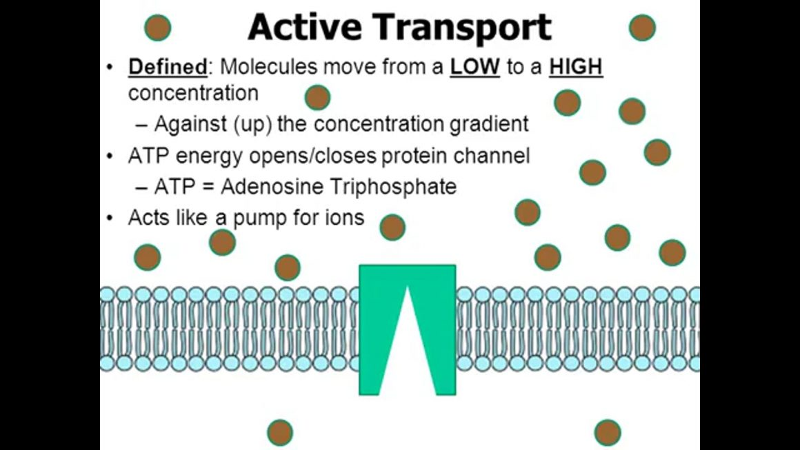 Active transport – updated